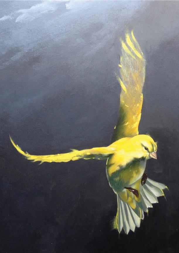 (c) Kidology Arts 2014, Canaries
